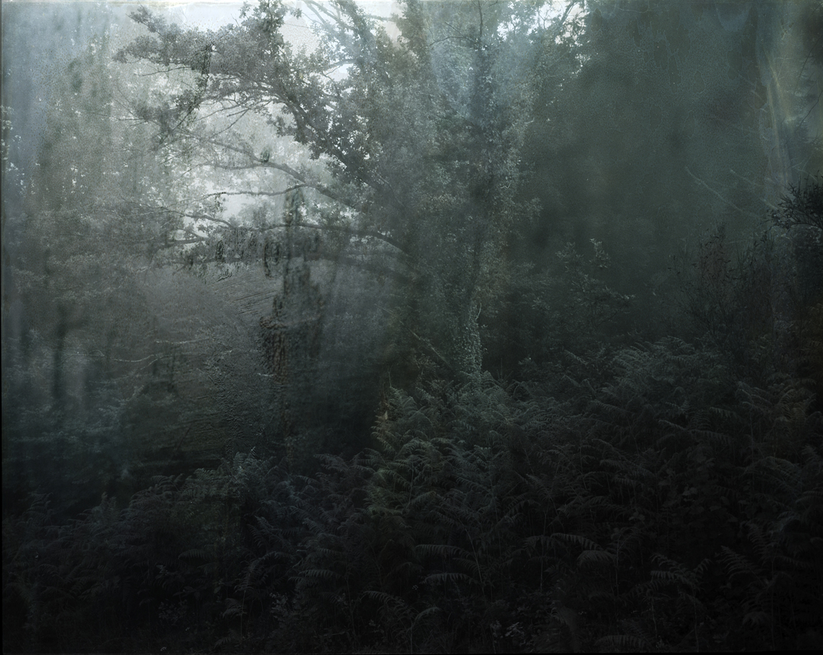 Frey_aurelia_Variations_03