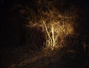 arbrelerins003